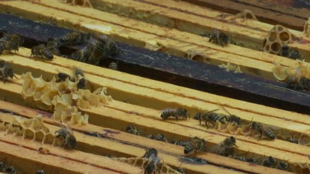 testNéonicotinoïdes : les apiculteurs déçus de la position belge