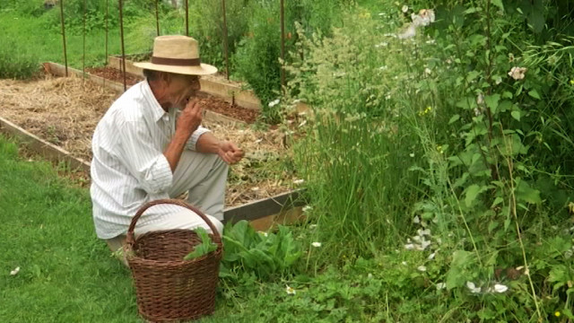 93% des mauvaises herbes de votre jardin  sont comestibles