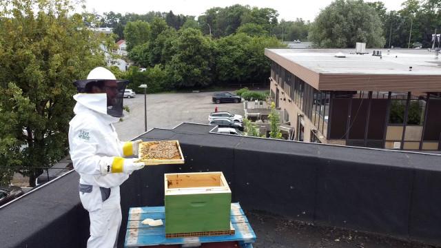 testDes ruches installées sur le toit d'un magasin à Braine-l'Alleud