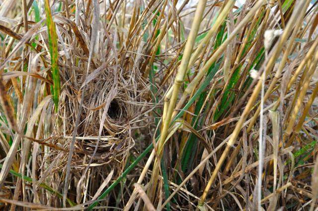 Des buissons et des haies pour la biodiversité