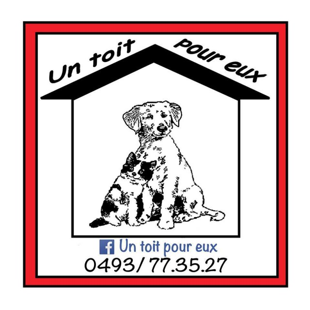 Un refuge pour chiens abandonnés ouvre à Nivelles