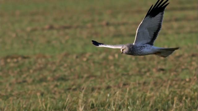 Orp-Jauche, 1ère commune du Bw à s'engager avec Natagora pour la protection des oiseaux