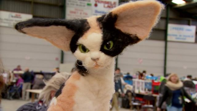 dbranché 13.29 : Concours beauté chats