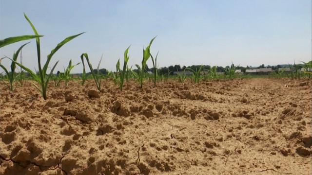 La sécheresse inquiète vivement les agriculteurs