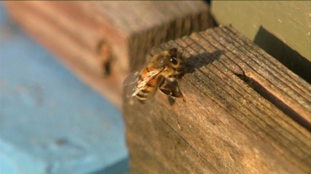 Braine-l'Alleud : semaine de l'abeille