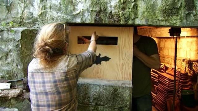 Chaumont-Gistoux : un gîte d'hiver pour chauve-souris dans un ancien moulin