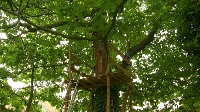 L'arbre rucher de Wavre 5ème au concours de l'Arbre belge de l'année
