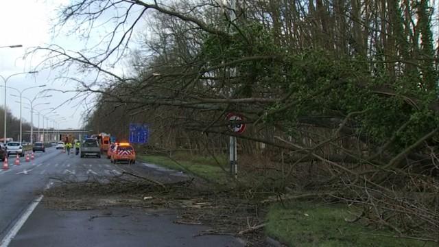 Un arbre est tombé sur le Boulevard de l'Europe à Wavre