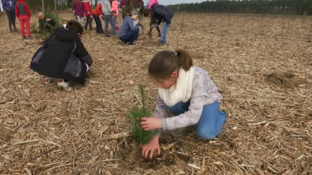 Des enfants plantent des arbres à Tangissart pour la Journée Internationale des Forêts