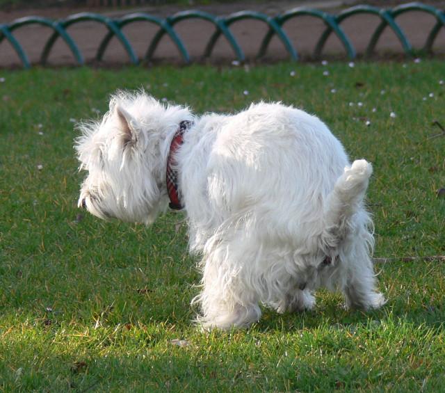 testNivelles traque les déjections canines !