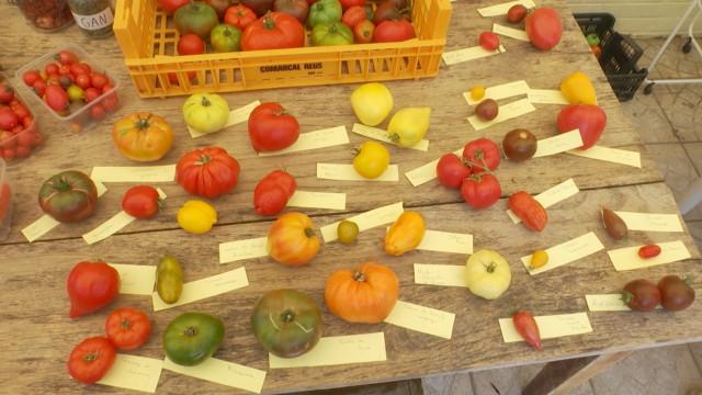 Non voyant, Eric Foort, cultive en permaculture 200 variétés de tomates dans son  potager