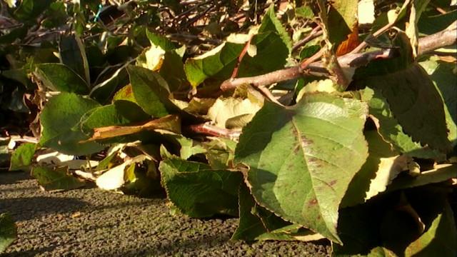 Semaine de l'Arbre : recevez gratuitement votre arbre fruitier!