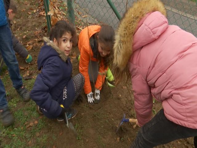 test176 arbres plantés par les élèves de l'école d'Orp-le-Grand !