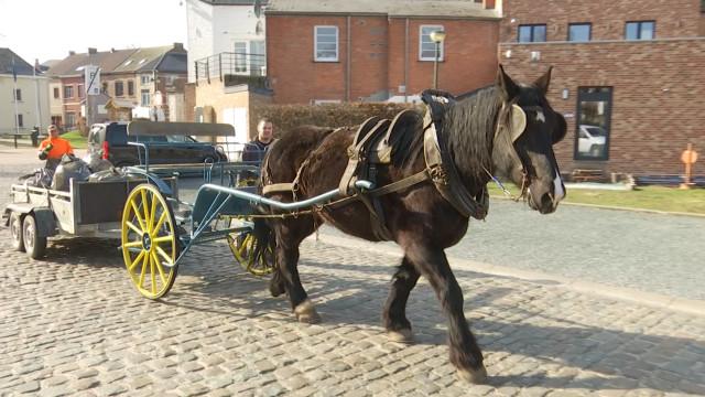 Rebecq : entretien d'espaces publics avec un cheval de trait