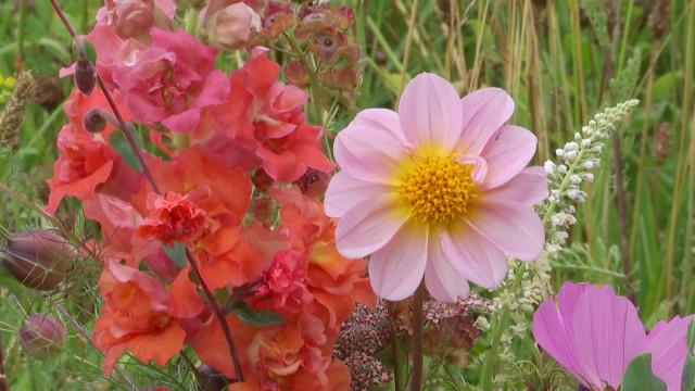 Belgium Slow Flowers : des fleurs locales, durables et de saison