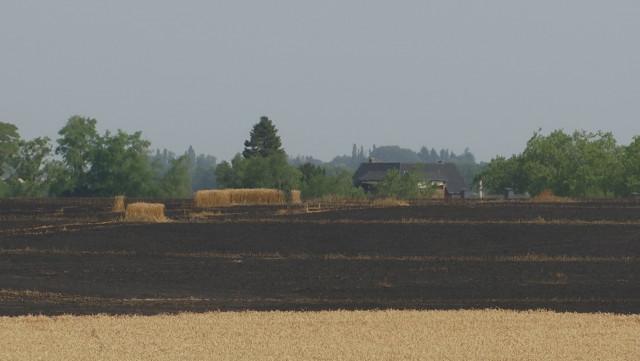 Genappe : 20 hectares de froment partis en fumée