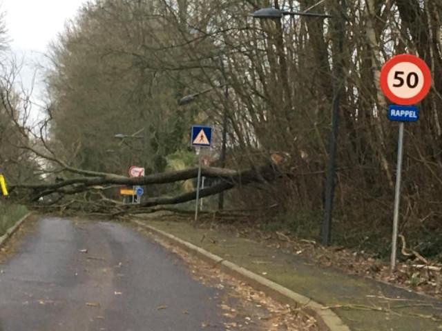 Prudence: la tempête Ciara fait des dégâts en Brabant wallon