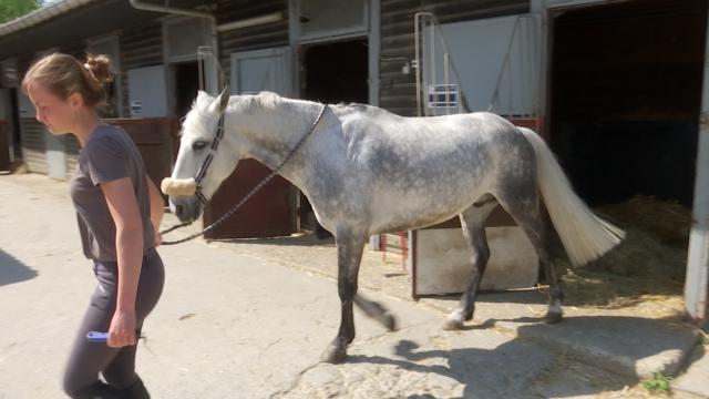 testDes coûts incompressibles et plus de revenus pour le poney club La Gaillemarde