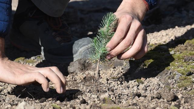 """testOpération """"1 naissance, 1 arbre"""" à Jodoigne"""