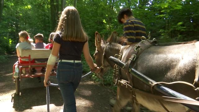 testEn balade avec les ânes à la ferme du Planois