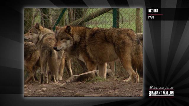 test#55 INCOURT – Le Loup