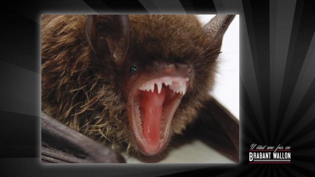 test#64 LASNE – La chauve-souris