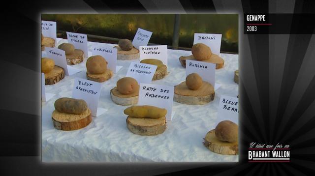 test#84 GENAPPE– Conservatoire wallon de la patate