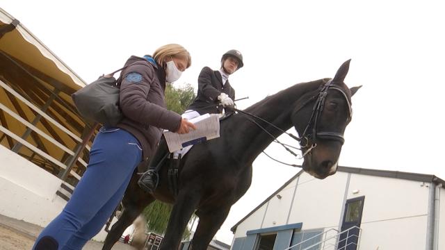 Clôture des concours de dressage en équitation : un sport qui exige de la discipline