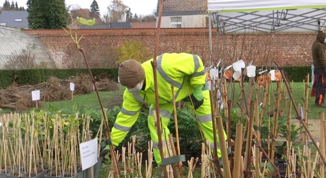 Wavre : la commune distribue gratuitement des arbres fruitiers