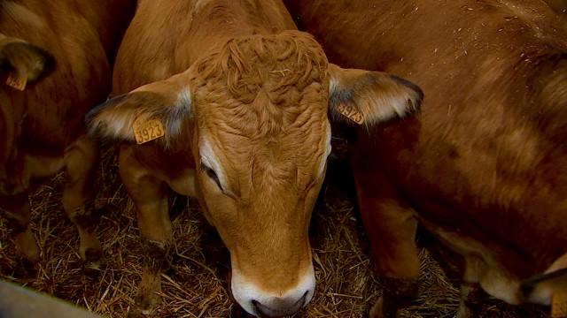 La Vache à Table : La boucherie directement à la ferme !