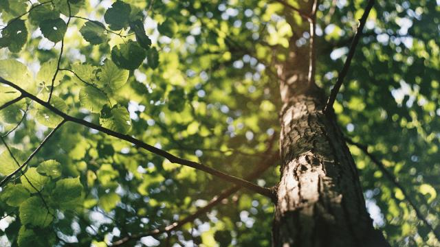 2.700 arbres seront distribués à Wavre les 21 et 22 novembre !