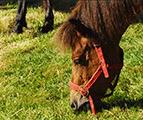 Villers-la-Ville : Nouveaux animaux à l'Abbaye