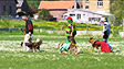 db 12.35 Carnaval chiens