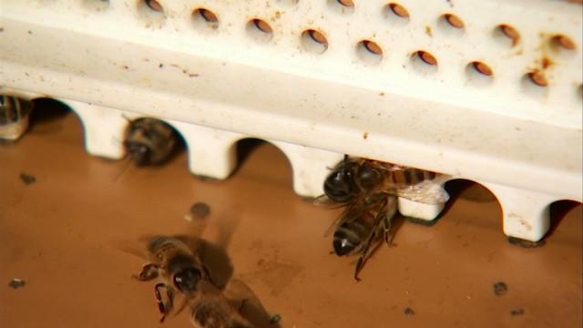 Incourt : un apiculteur d'Opprebais donne gratuitement des essaims d'abeilles