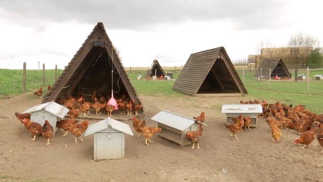 Incourt: les poulets en plein air de la Ferme de Julien
