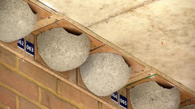 """""""Sauver les hirondelles"""" : des logements tout prêts pour ramener l'oiseau migrateur à LLN"""