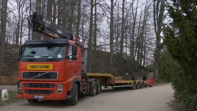 14 arbres abattus dans le parc Solvay : les visiteurs en cause