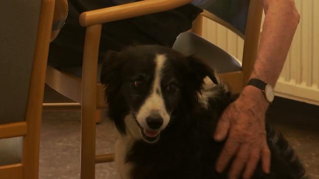 Activ'Dog renoue les liens entre les chiens et les humains !