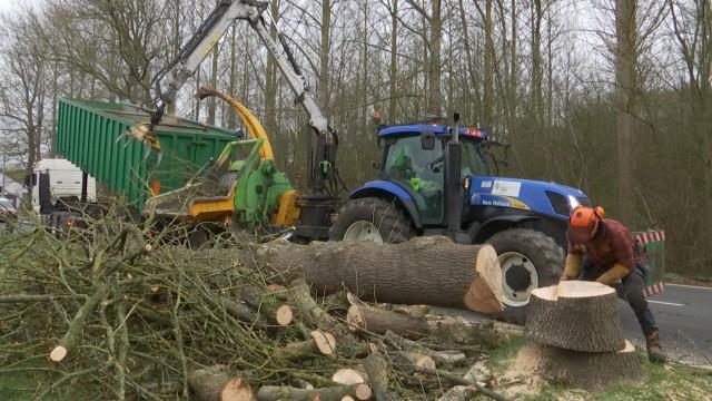 Brabant wallon : campagne d'abattage d'arbres