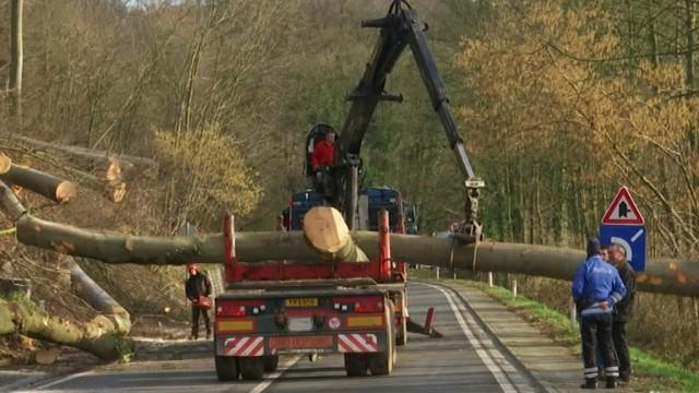 testCirculation interdite dans le Bois de Beausart : on y coupe 150 arbres