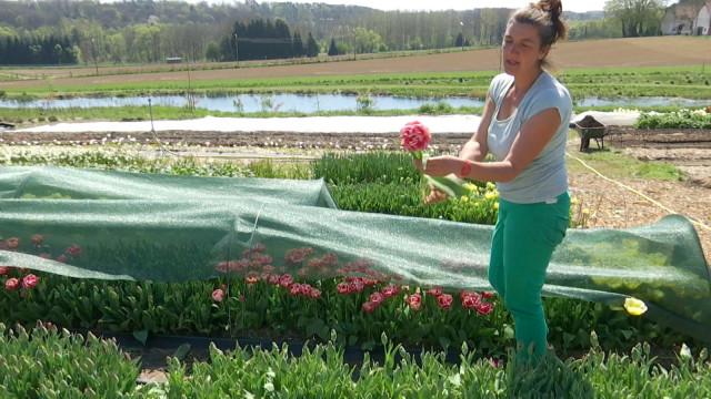 Des fleurs écoresponsables cultivées à Rosières