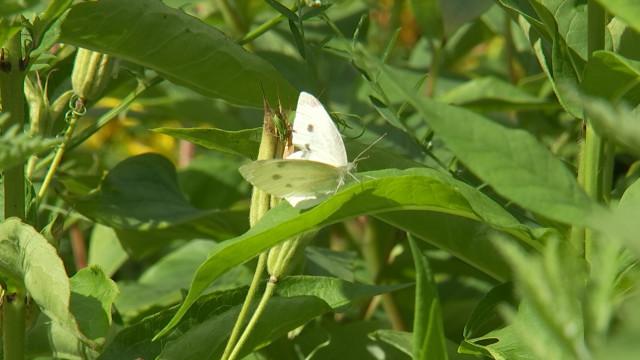 testDes jardins naturels pour faire vivre les papillons