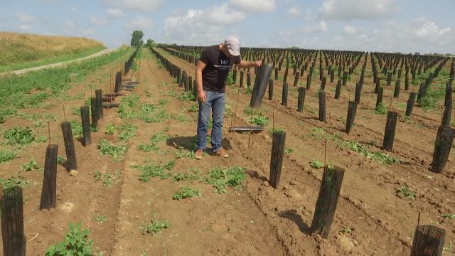 testDes pieds de vigne arrachés et volés au Domaine W à Saintes