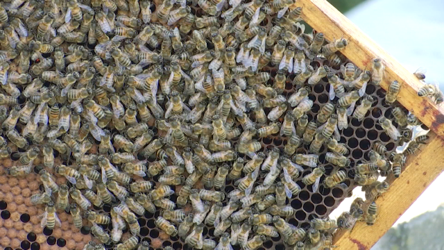 testDes ruches dans des stations d'épurations