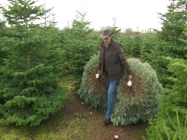 testDes sapins de Noël cultivés à Jodoigne