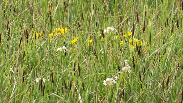 testDeux nouvelles réserves naturelles gérées par Natagora à Braine-le-Château