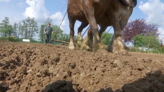 Un pépiniériste qui n'en a pas fini de travailler avec les chevaux
