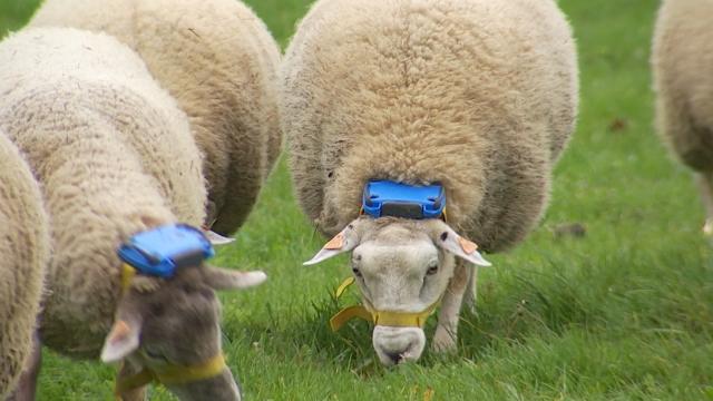 Gembloux Agro-Bio Tech : un retour à l'élevage traditionnel par la technologie?