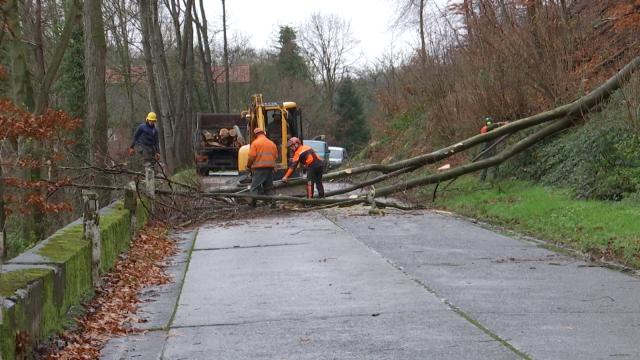 Grez-Doiceau : la rue Fond du Moulin fermée jusque lundi matin suite à une chute d'arbre