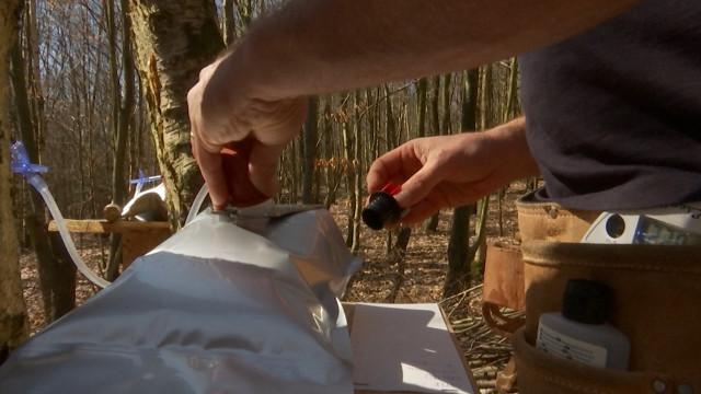 Insolite : un lasnois récolte la sève du bouleau et la commercialise